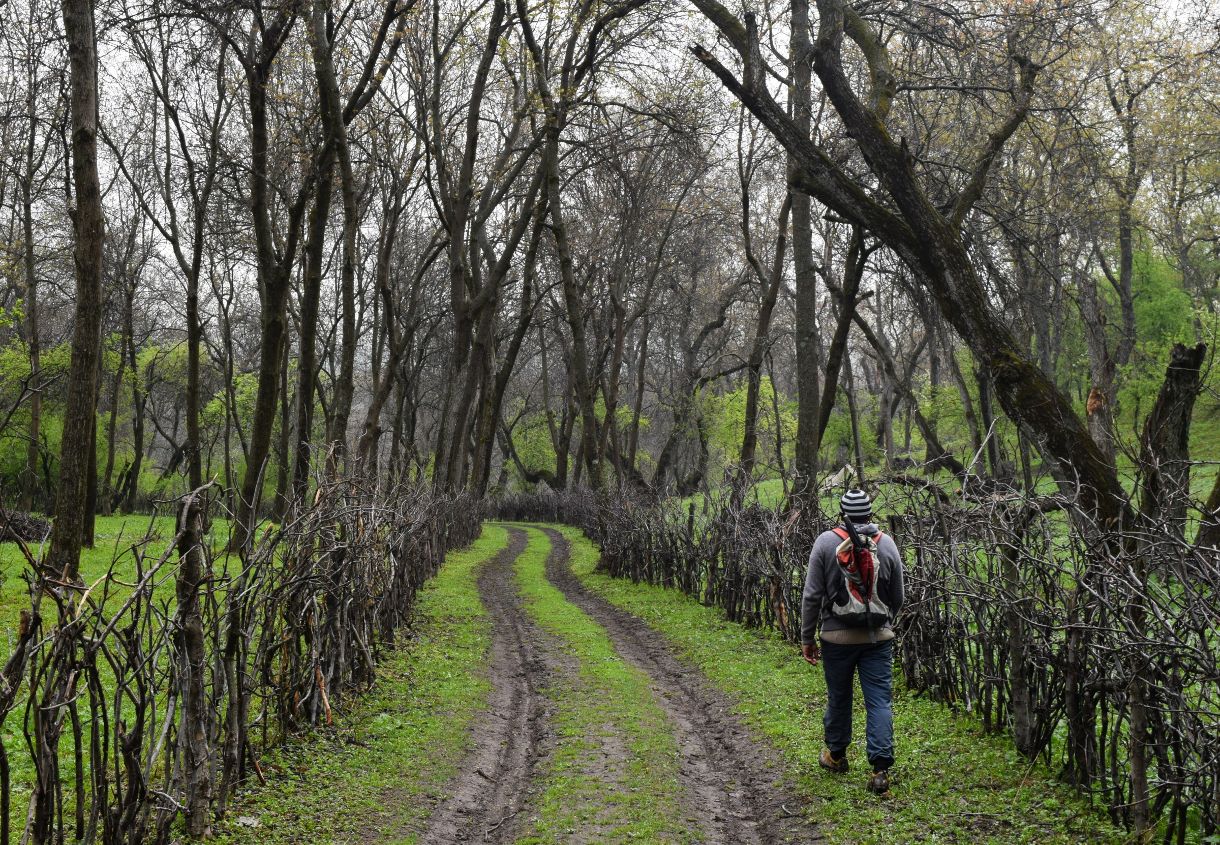 Inside the World's Largest Walnut Forest
