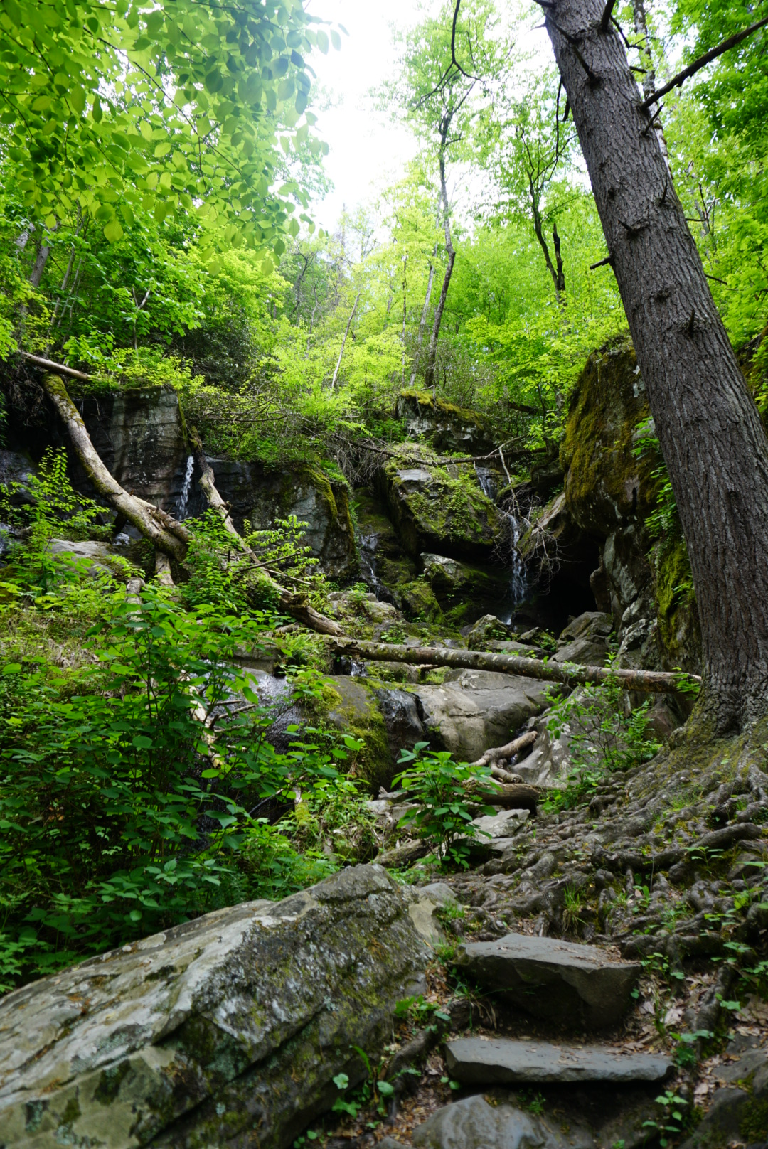 The Place of a Thousand Drips on the Roaring Fork Motor Nature Trail in Tennessee