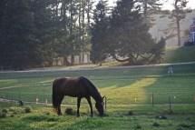 Almonzo the Horse