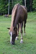 Destiny the Horse