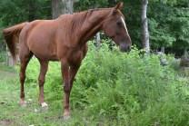 Grafton the Horse