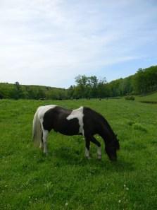 Jack the Pony