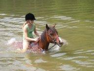 Jasper the Horse