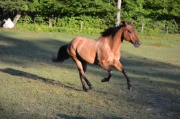 Jazzy the Horse