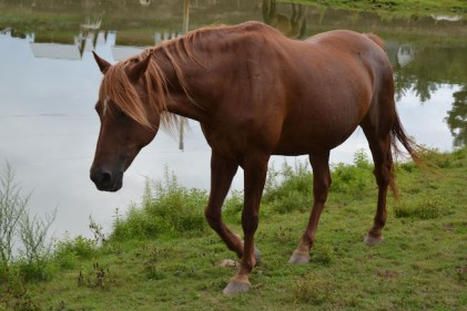 Orsha the Horse