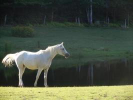 Sabrina the Horse