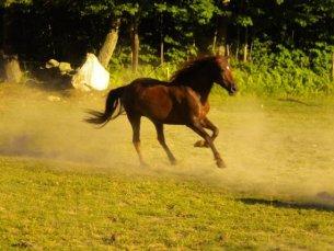 Sera the Horse