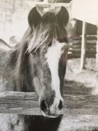 Comet the Horse