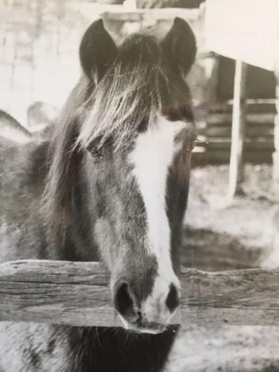 Comet the Horse