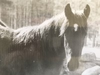 Pony in Pine Drive