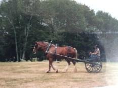 Big horse little cart