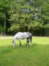 New Horse
