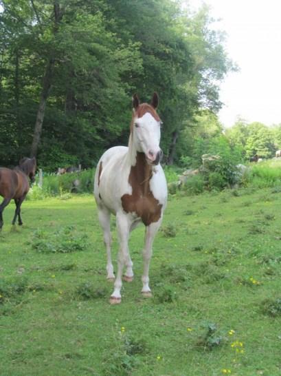 Huck the Horse