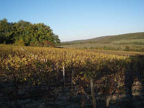 burgundy-france-golden-autumn-vines-october-2007.jpg