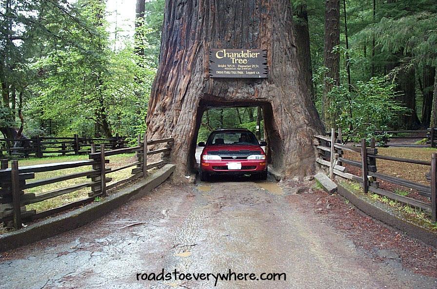 010420_redwoods8-wm