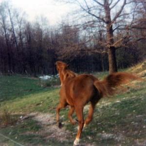 1987-riorunning