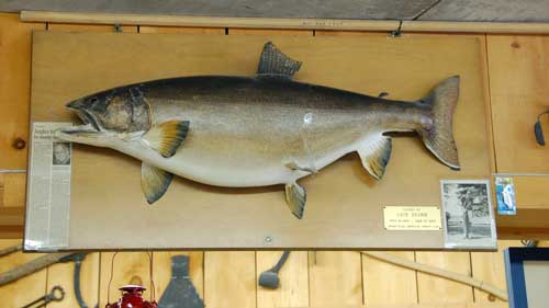 One of many trophies at Robinson's General Store in Dorset – 41 inches, 35 pounds, caught by Jack Bramm on Lake of Bays in 1966