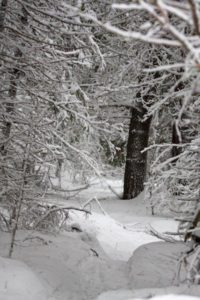 Snow covered path through trees in Algonquin Park