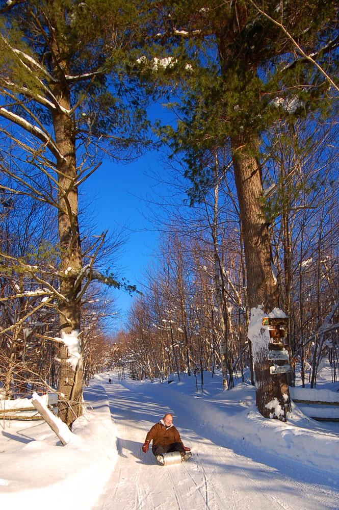 toboggan between trees