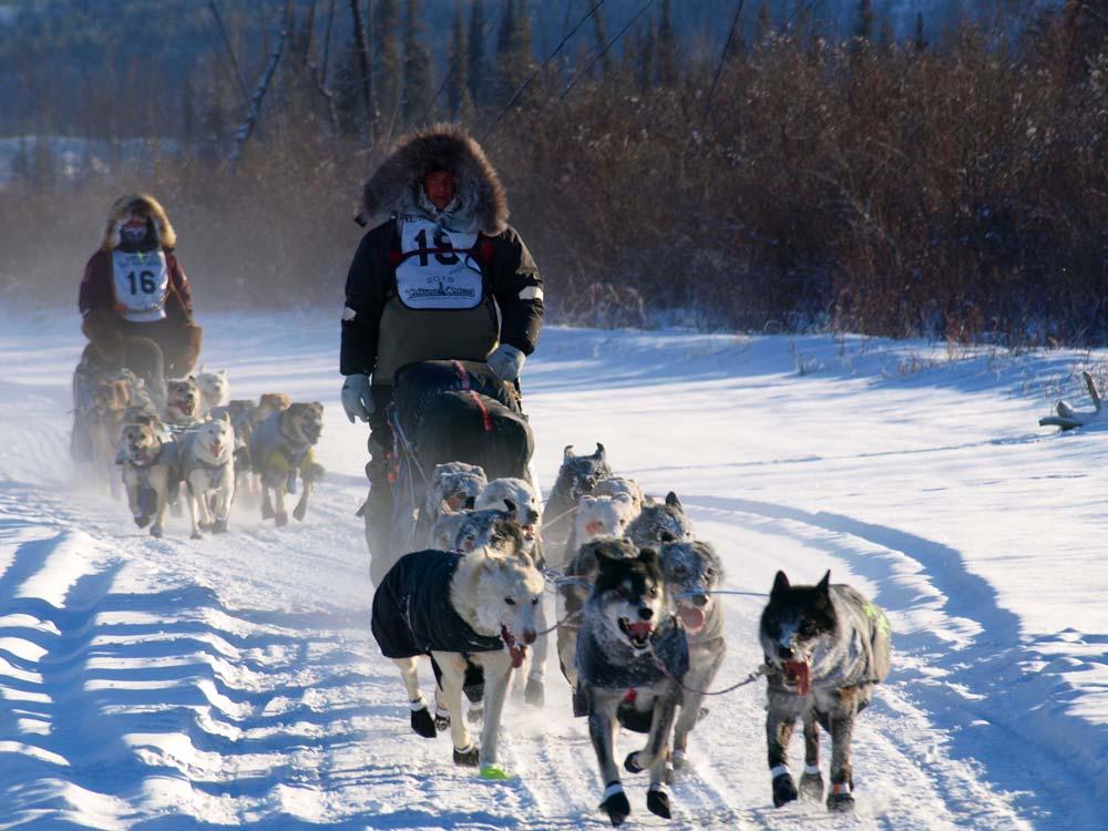 Yukon-Quest-two-mushers