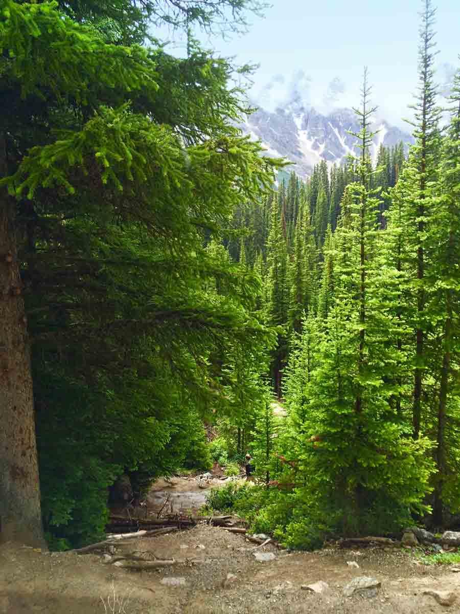 forest near Lake Agnes Tea House