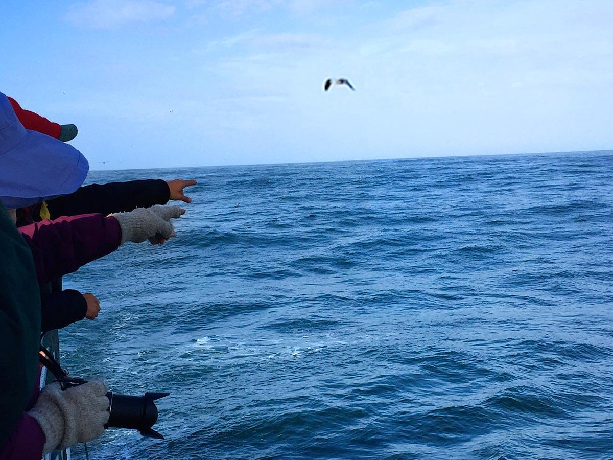 In Search of Albatross Carol Patterson