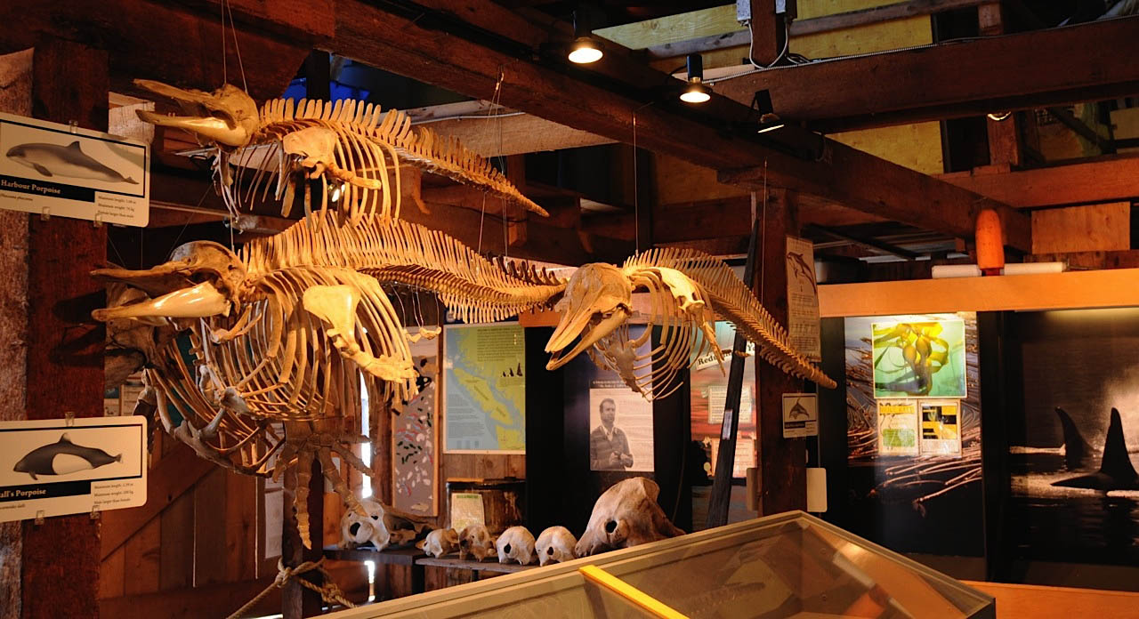 Whale Interpretive Centre, Telegraph Cove