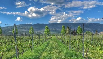 Sustainable Tourism in B.C.'s Okanagan wine country