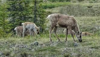 Ivvavik National Park and Herschel Island Territorial Park (Qikiqtaruk)