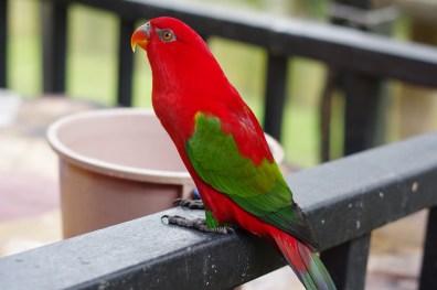 Bird # 4