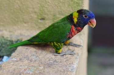Bird # 5b