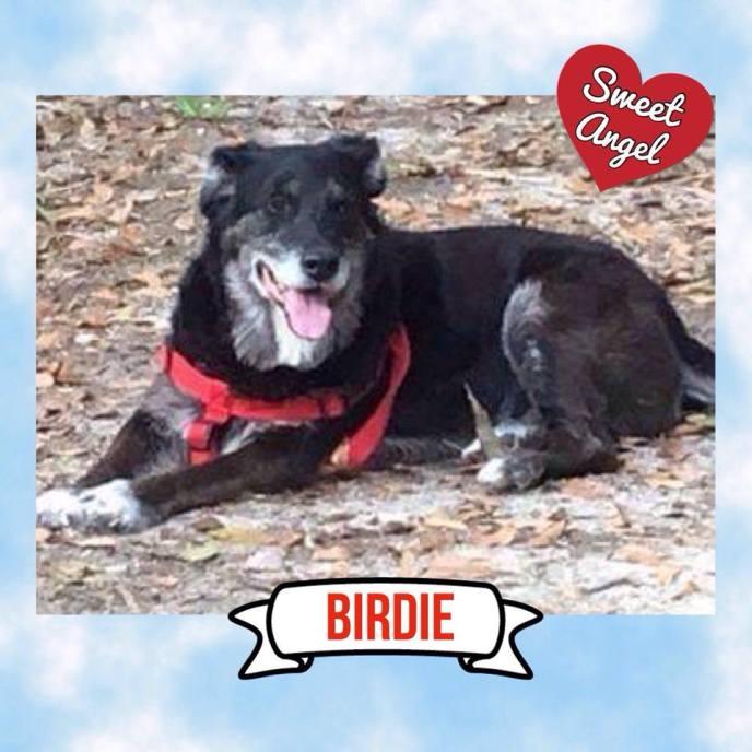Birdie Sweet Angel