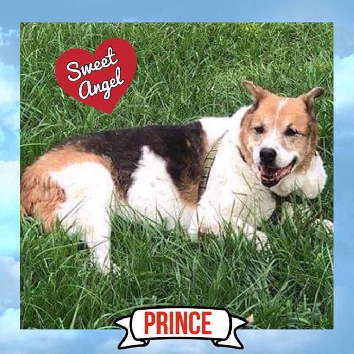 Prince sweet angel