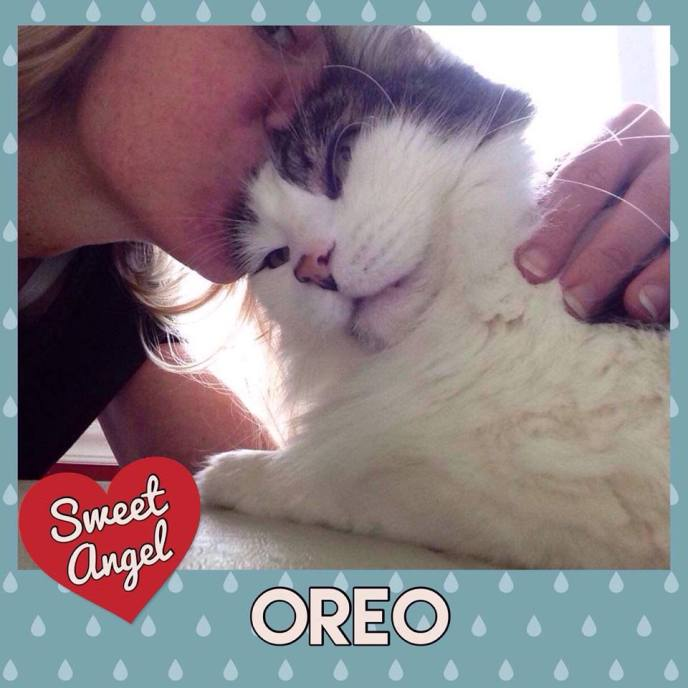 oreo sweet angel