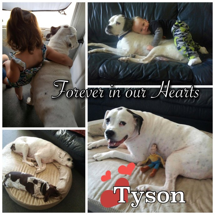 Tyson Forever Hearts collage