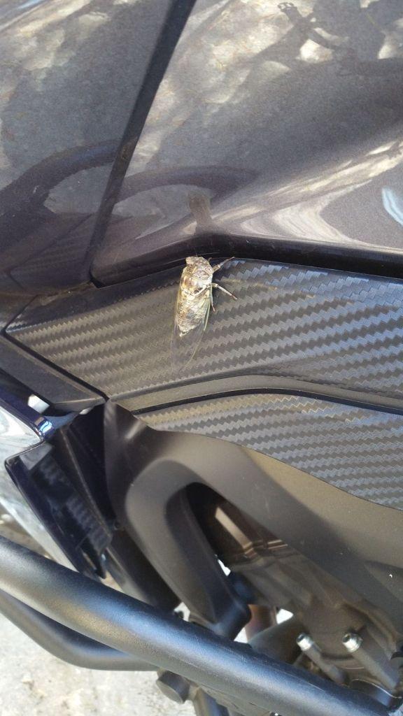 Quand tu veux monter sur la moto...mais en fait non...