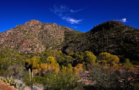 Sabino Canyon 025