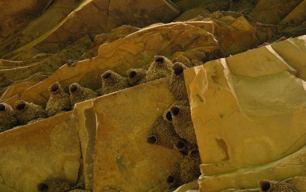 Bear Gulch Petroglyphs