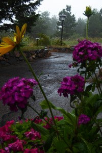 purple and yellow flowers in the rain