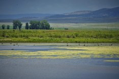 moss covered lake with ducks on Plains