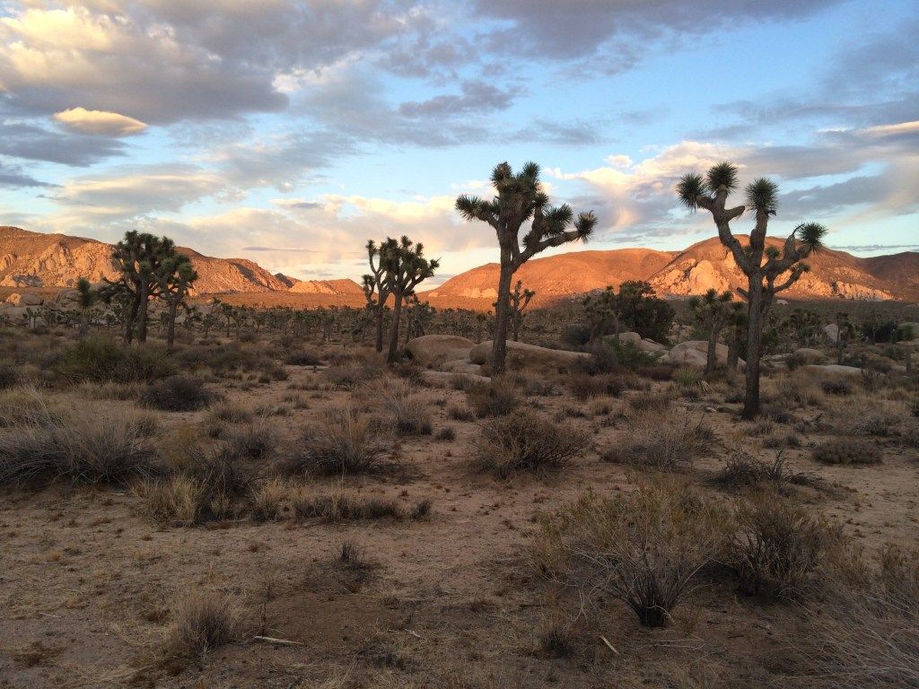 Visit National Parks for Free: Joshua Tree National Park