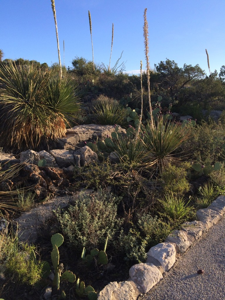 Carlsbad Caverns National Park Nature Trail