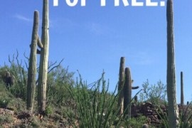 How to Visit National Parks for Free