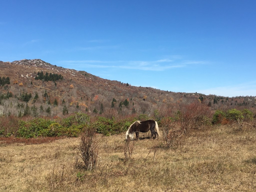 Grayson Highlands State Park Ponies