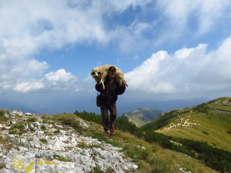 The good shepherd - Piule Peak, Retezatul Mic