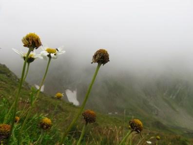 Fog, flowers, snow