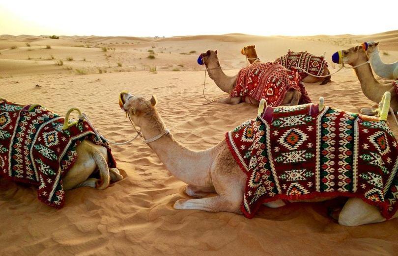 desert-safari-dubai-roamilicious