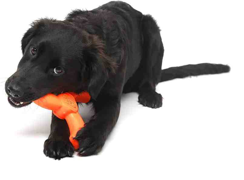best-dog-chew-toy-travel-roamilicious