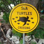 Sea Turtles Crossing