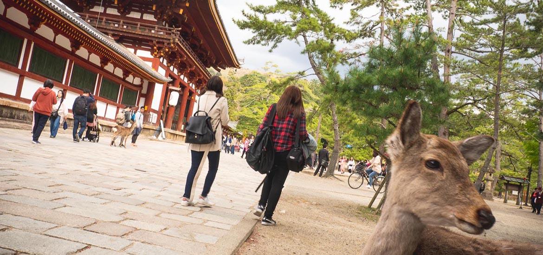 A Half Day in Nara, Japan